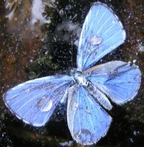 verdronken_vlinder